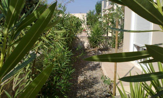14 Back garden1